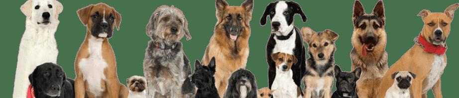 sitedogs.ru — сайт про овчарок